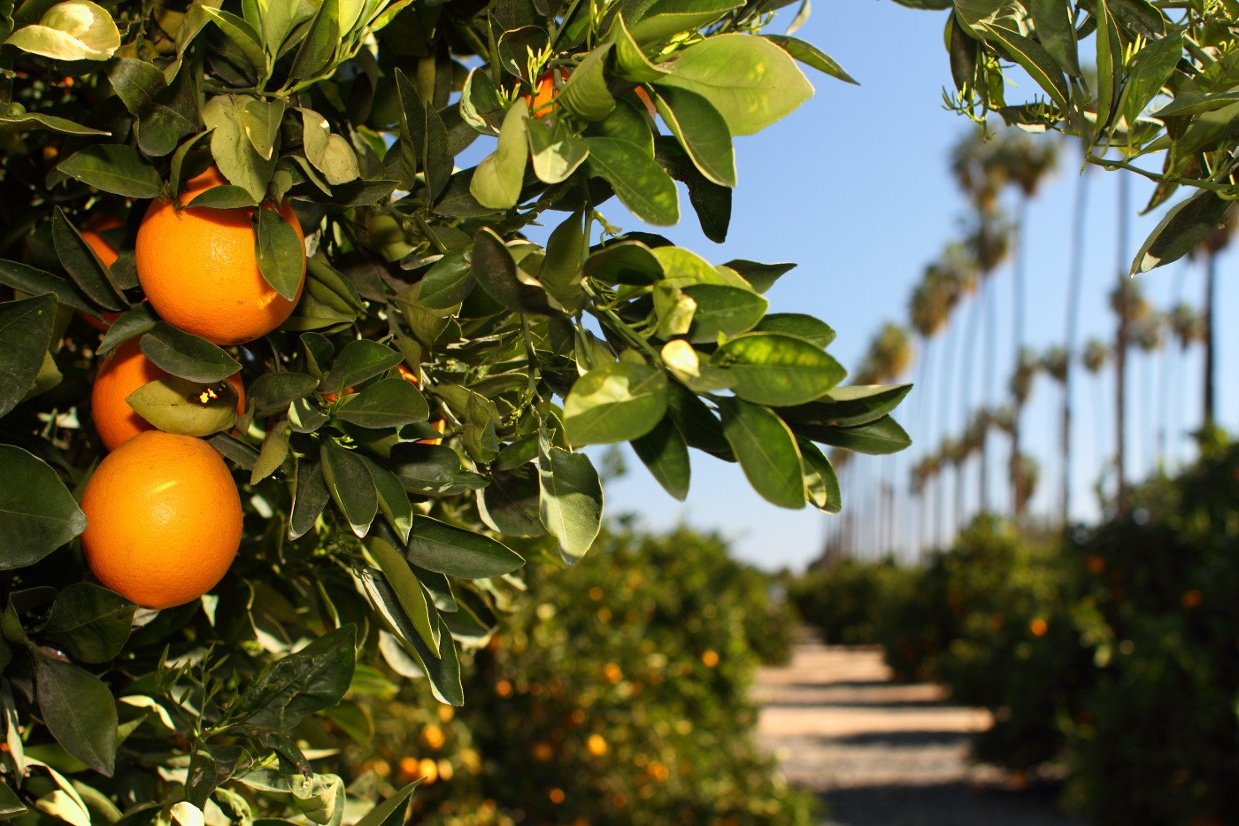 California State Citrus Park
