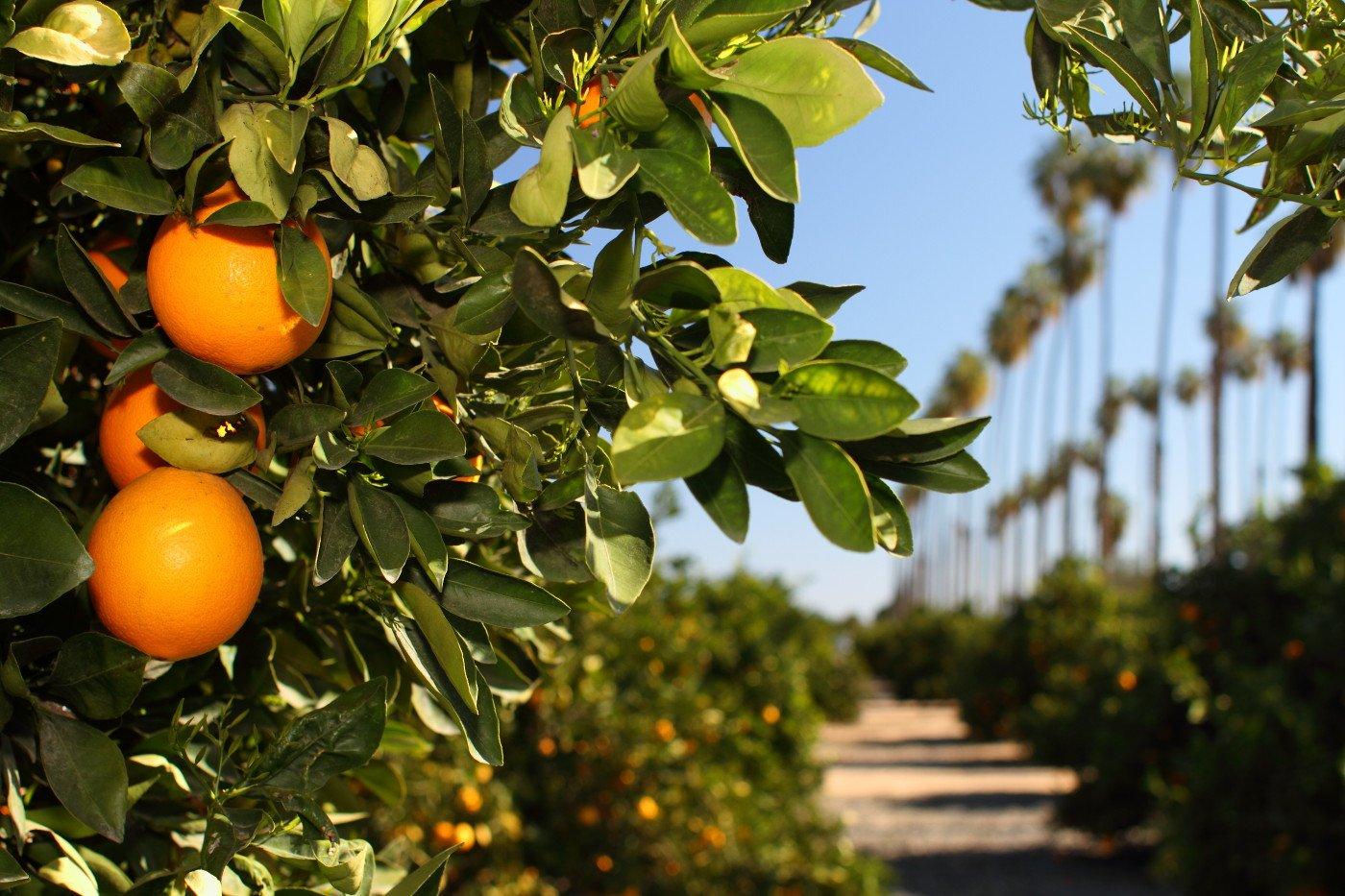 California State Citrus Park